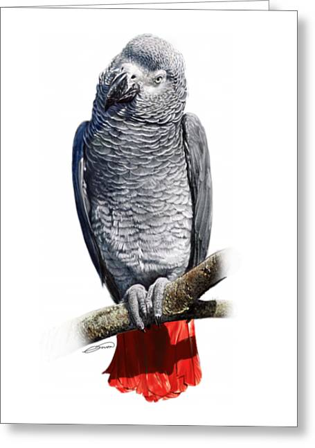 African Grey Parrot C Greeting Card by Owen Bell
