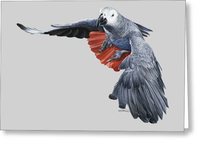 African Grey Parrot Flying Greeting Card by Owen Bell
