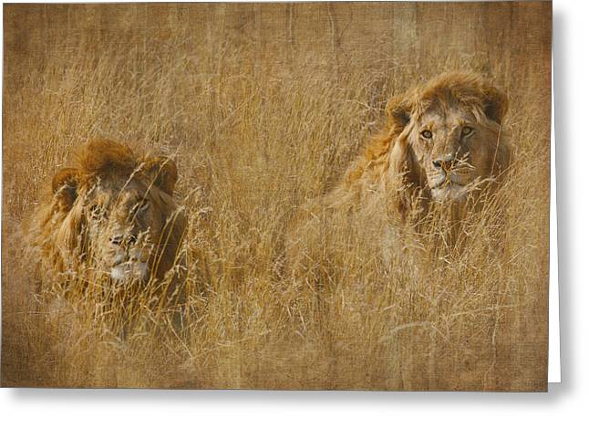 Greeting Card featuring the tapestry - textile African Lion Brothers by Kathy Adams Clark