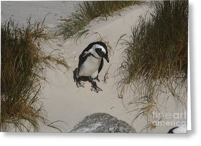 African Penguin On A Mission Greeting Card