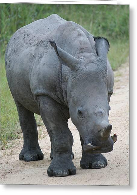 African Rhino Greeting Card