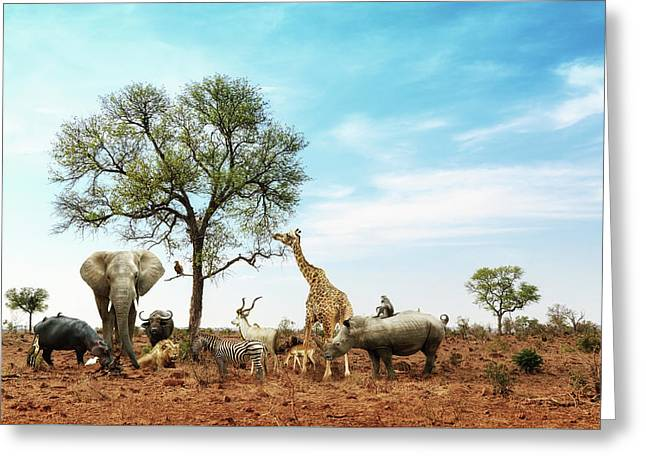 African Safari Animals Meeting Together Around Tree Greeting Card