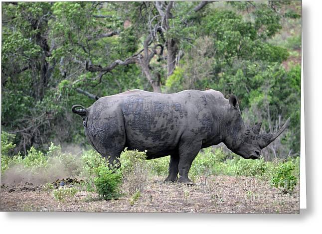 African Safari Naughty Rhino Greeting Card