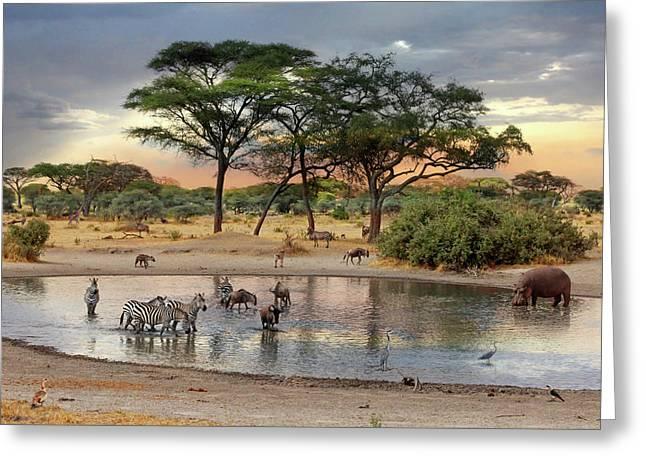 African Safari Wildlife At The Waterhole Greeting Card