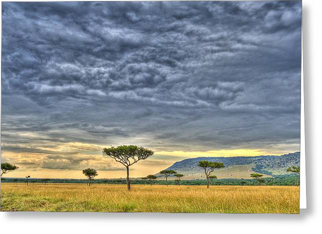 Out Of Africa Greeting Cards - African Savanna Greeting Card by Babur Yakar