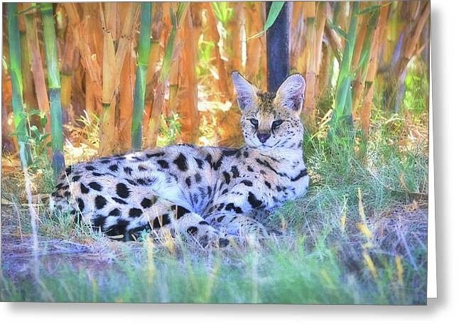 African Serval Wildcat Greeting Card by Donna Kennedy