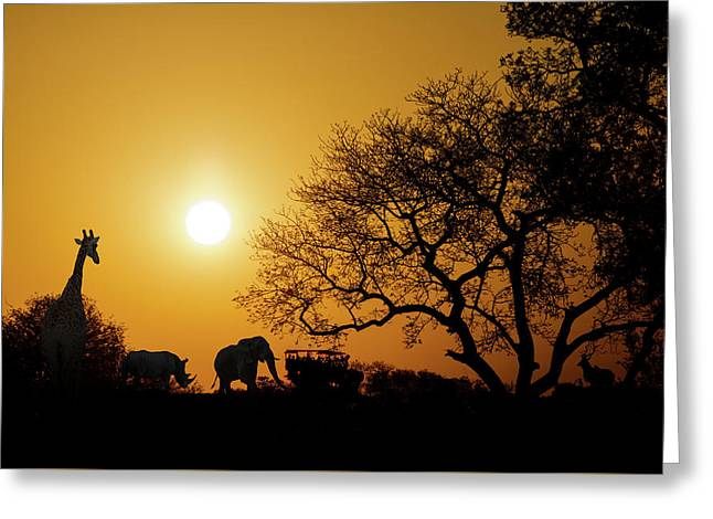 African Sunset Silhouette With Copy Space Greeting Card