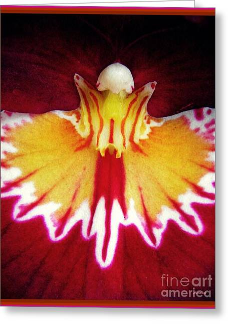 Red Pansy Orchid Abstract Greeting Card