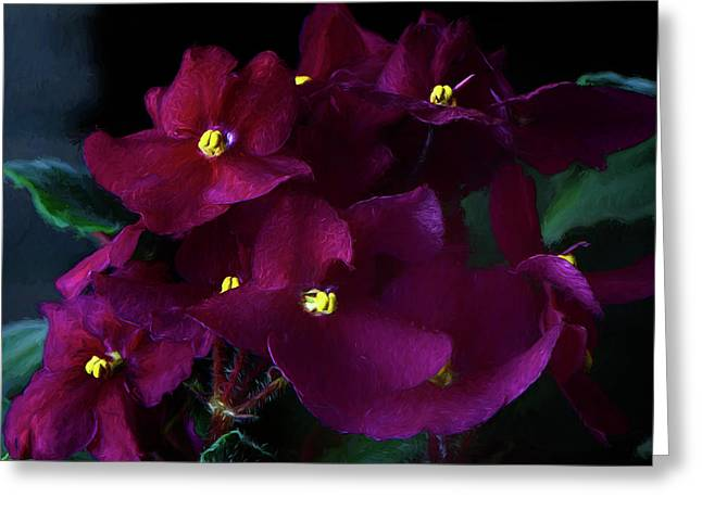 Greeting Card featuring the photograph African Violets Photo Art by Sharon Talson
