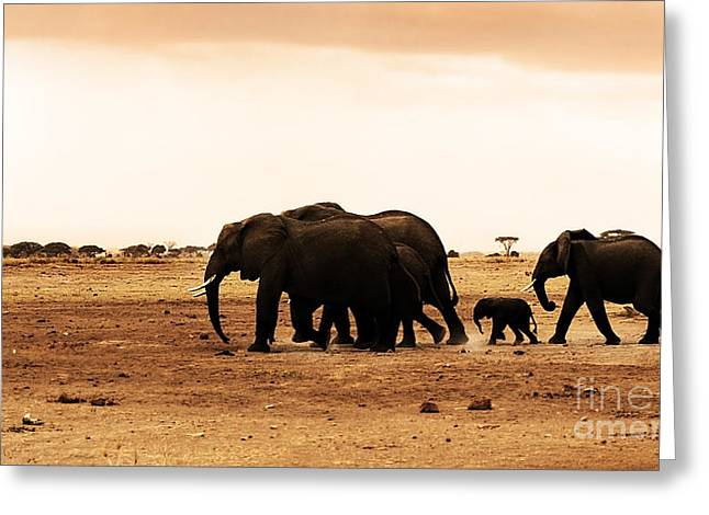 Mother Land Greeting Cards - African wild elephants Greeting Card by Anna Omelchenko