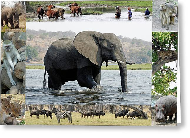 African Wildlife Montage - Elephant Greeting Card