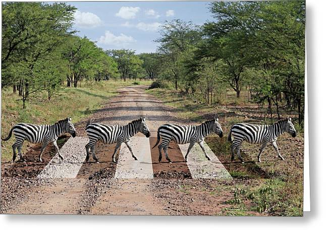 African Zebra Crossing Greeting Card