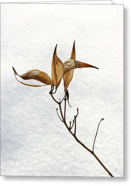 Steve Augustin Greeting Cards - After Setting Seed Greeting Card by Steve Augustin