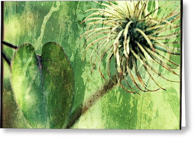 The Hills Digital Art Greeting Cards - After the Bloom Greeting Card by Bonnie Bruno