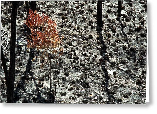After The Bushfire Greeting Card by Rick Piper Photography