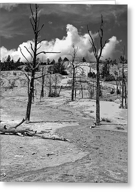 Greeting Card featuring the photograph After The Fire by Nigel Fletcher-Jones