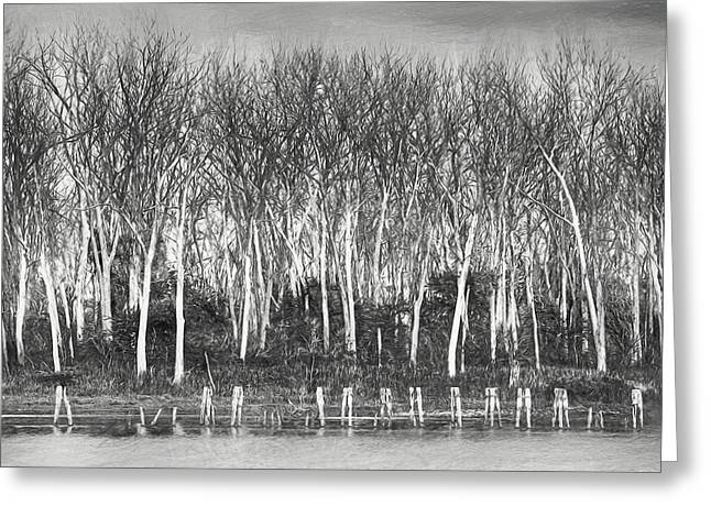 After The Flood - Black And White Greeting Card