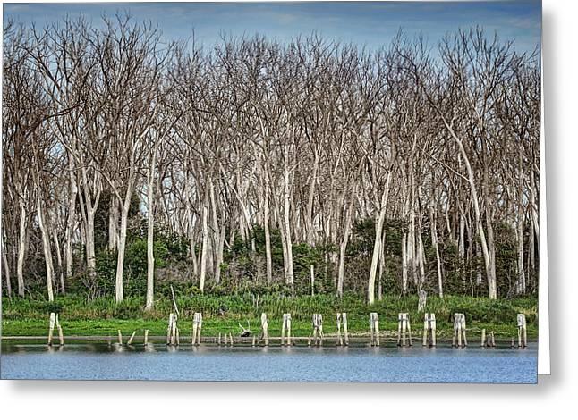 After The Flood - Desoto National Wildlife Refuge Greeting Card