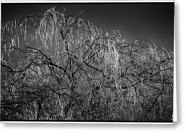 After The Ice Storm Greeting Card