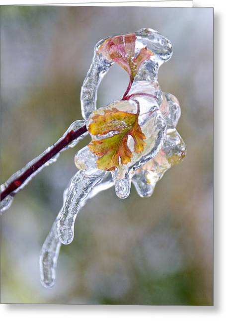 Sean Griffin Greeting Cards - After the Ice Storm Greeting Card by Sean Griffin