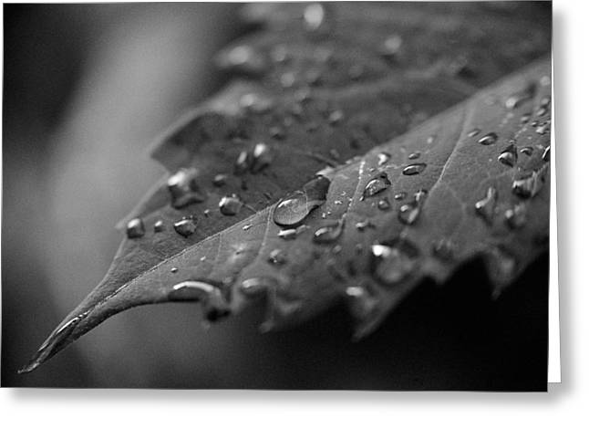 After The Morning Rain Greeting Card by Jon Woodhams
