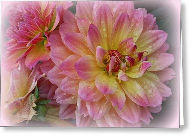 After The Rain - Dahlias Greeting Card