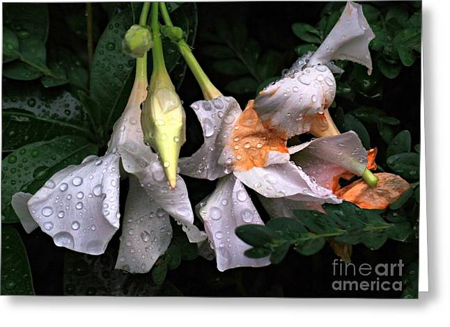 After The Rain - Flower Photography Greeting Card