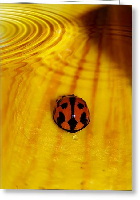 After The Rain Greeting Card by Lesley Smitheringale
