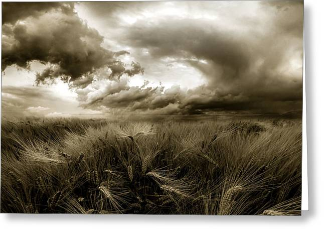 After The Storm  Greeting Card by Franziskus Pfleghart