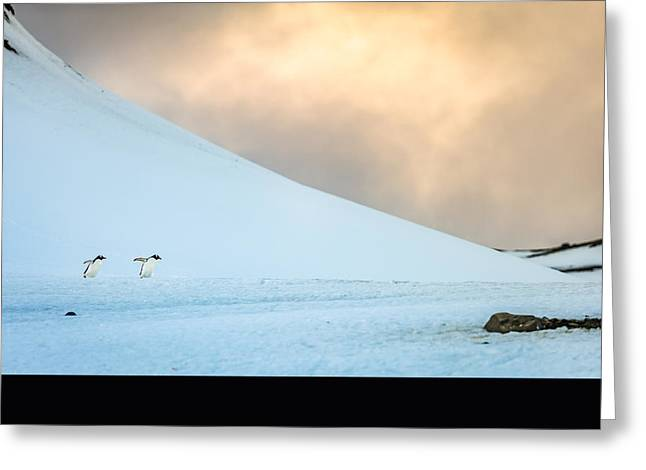 Afternoon Commute - Antarctica Penguin Photograph Greeting Card by Duane Miller