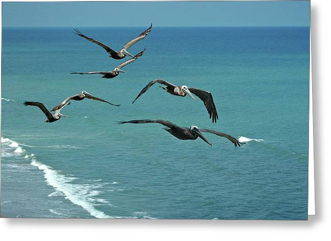 Afternoon Flight Greeting Card by Frank Mari