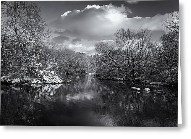 Afternoon In Shades Of Gray Greeting Card by Rachel Cohen