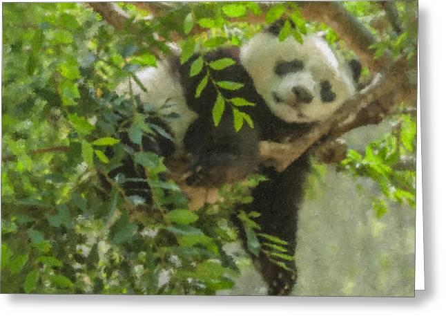 Afternoon Nap Baby Panda Greeting Card