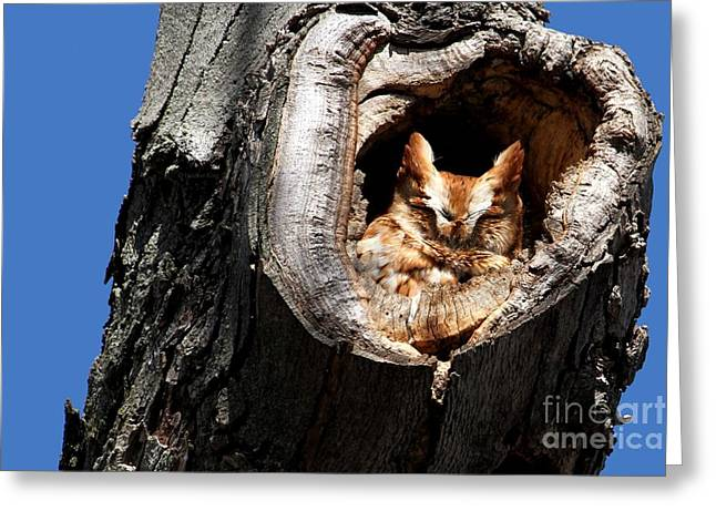 Afternoon Nap Greeting Card by Heather King