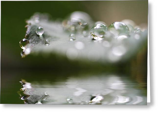 Afternoon Raindrops Greeting Card by Kym Clarke