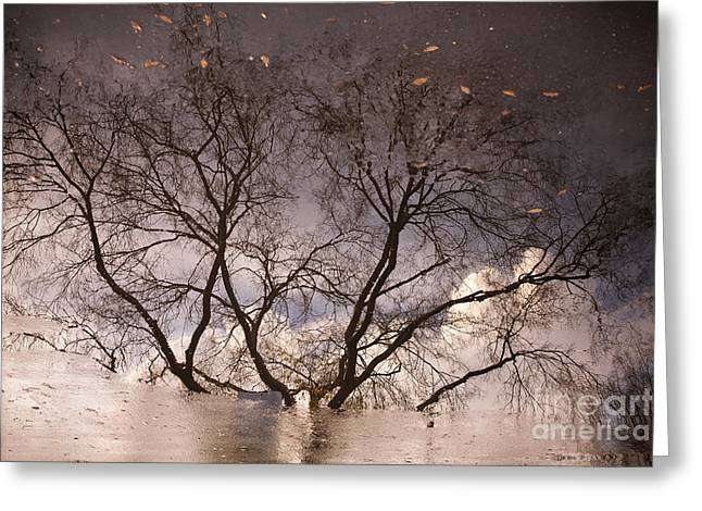 Afternoon Reflection Greeting Card by Derek Selander