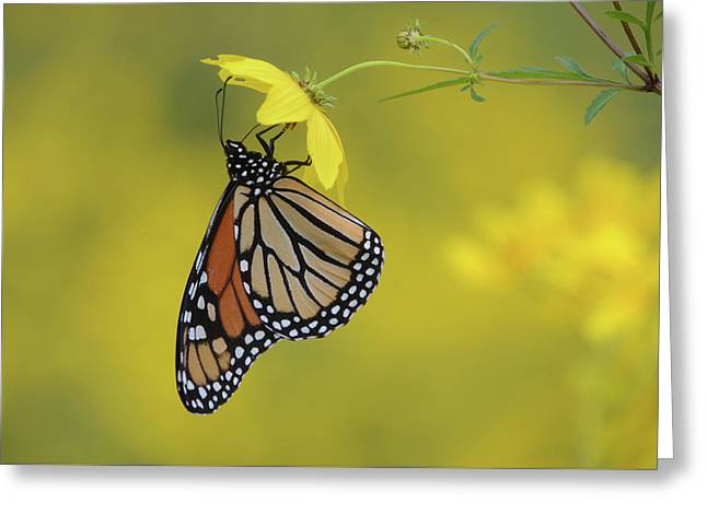 Greeting Card featuring the photograph Afternoon Snack by Ann Bridges