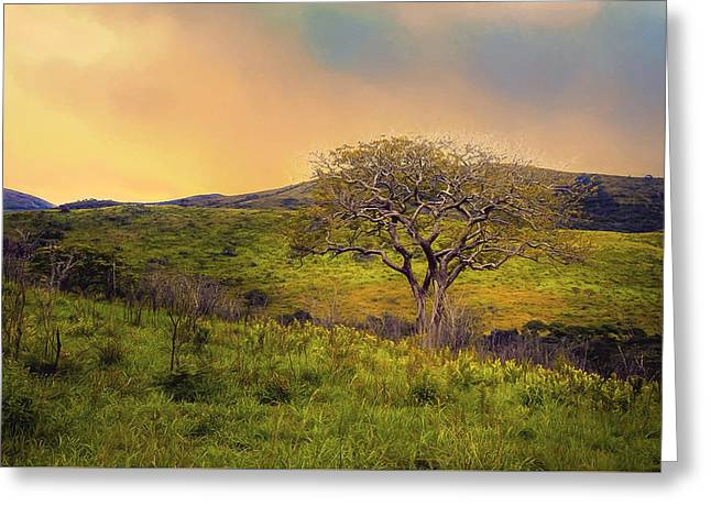 Afternoon Storm Greeting Card by Maria Coulson