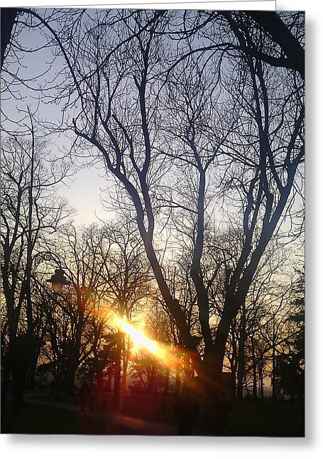 Afternoon Sunlight In Belgrade Kelemegdan Park Greeting Card by Anamarija Marinovic
