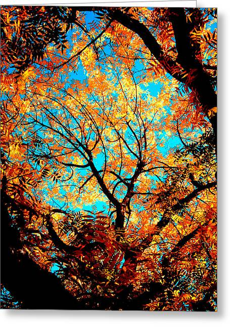 Afternoon Greeting Card by Tim Tanis