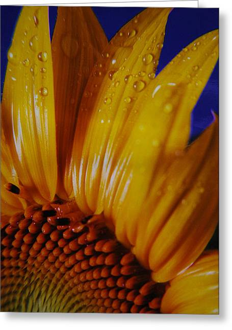 Against The Blue Greeting Card by Lori Mellen-Pagliaro