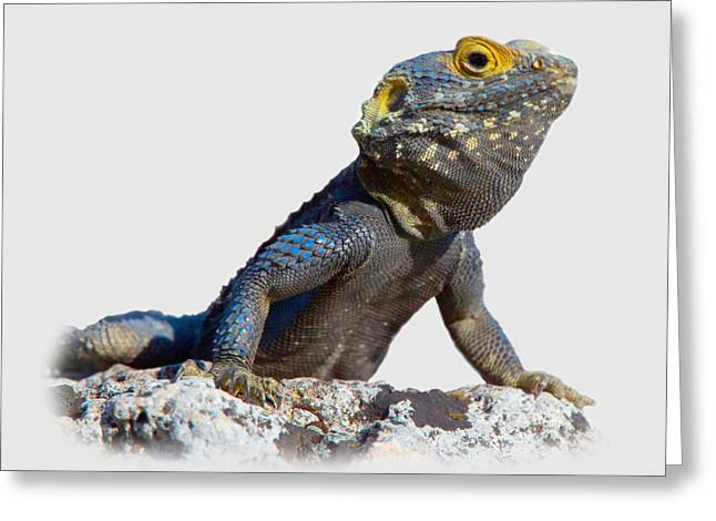 Agama Basking On A Rock T-shirt Greeting Card