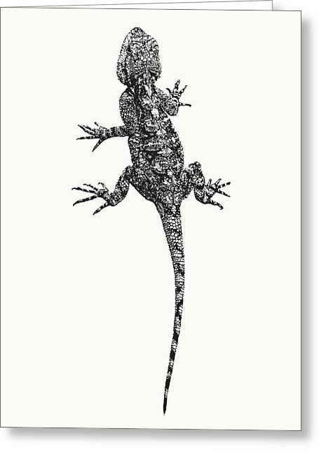 Agama Lizard In Graphic Monochrome Greeting Card