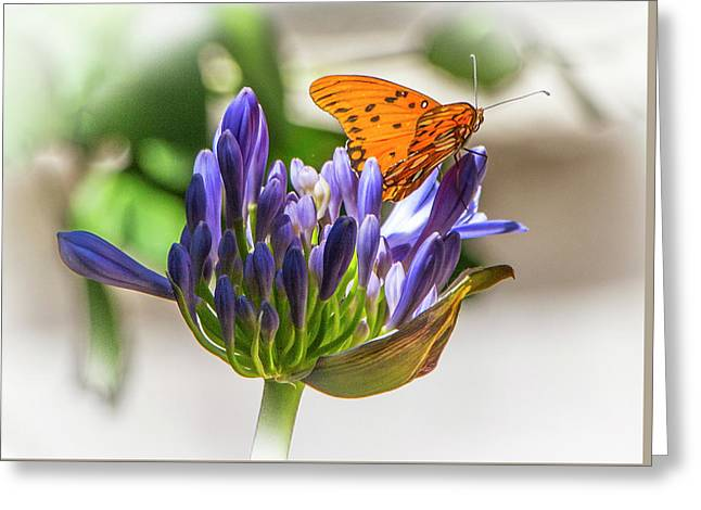 Agapanthus And Milkweed Tiger Butterfly Greeting Card by Venetia Featherstone-Witty
