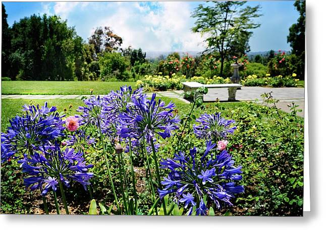 Agapanthus In The Rose Garden Greeting Card