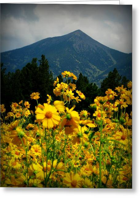Agassiz Peak High Above The Meadow Greeting Card
