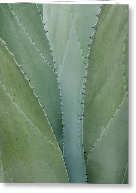 Agave Abstract. Greeting Card by Rob Huntley