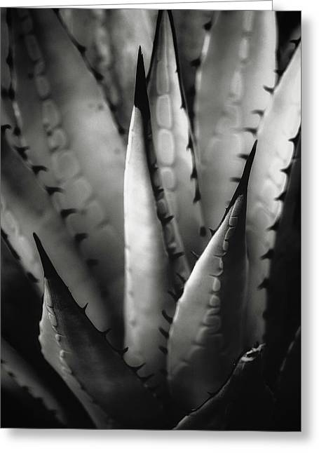Greeting Card featuring the photograph Agave And Patterns by Eduard Moldoveanu