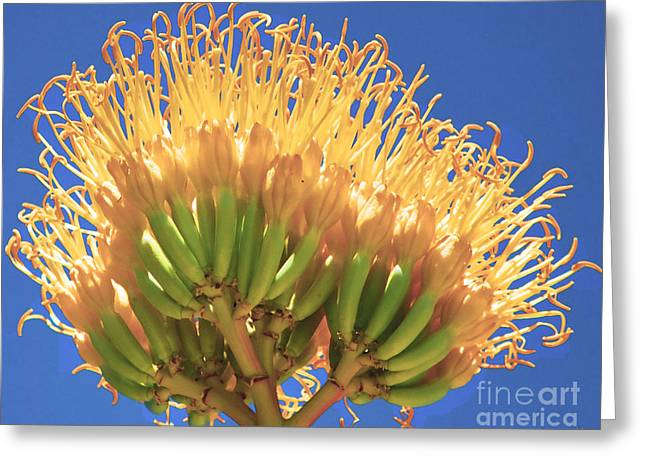 Agave Bloom Greeting Card