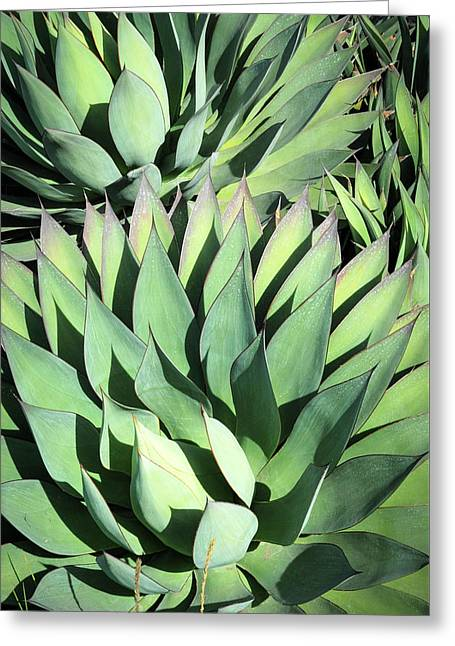 Agave Greeting Card by Catherine Lau